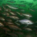 SEAMOUNTS – Deep Diving Exploration