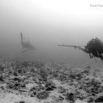 Bull Sharks Tagging Expeditions – Mision Tiburon – Bat Islands